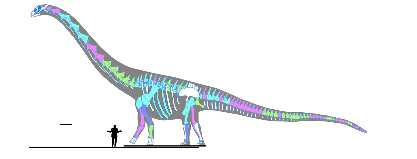 The almighty Patagotitan reaches 122 feet from head to toe.
